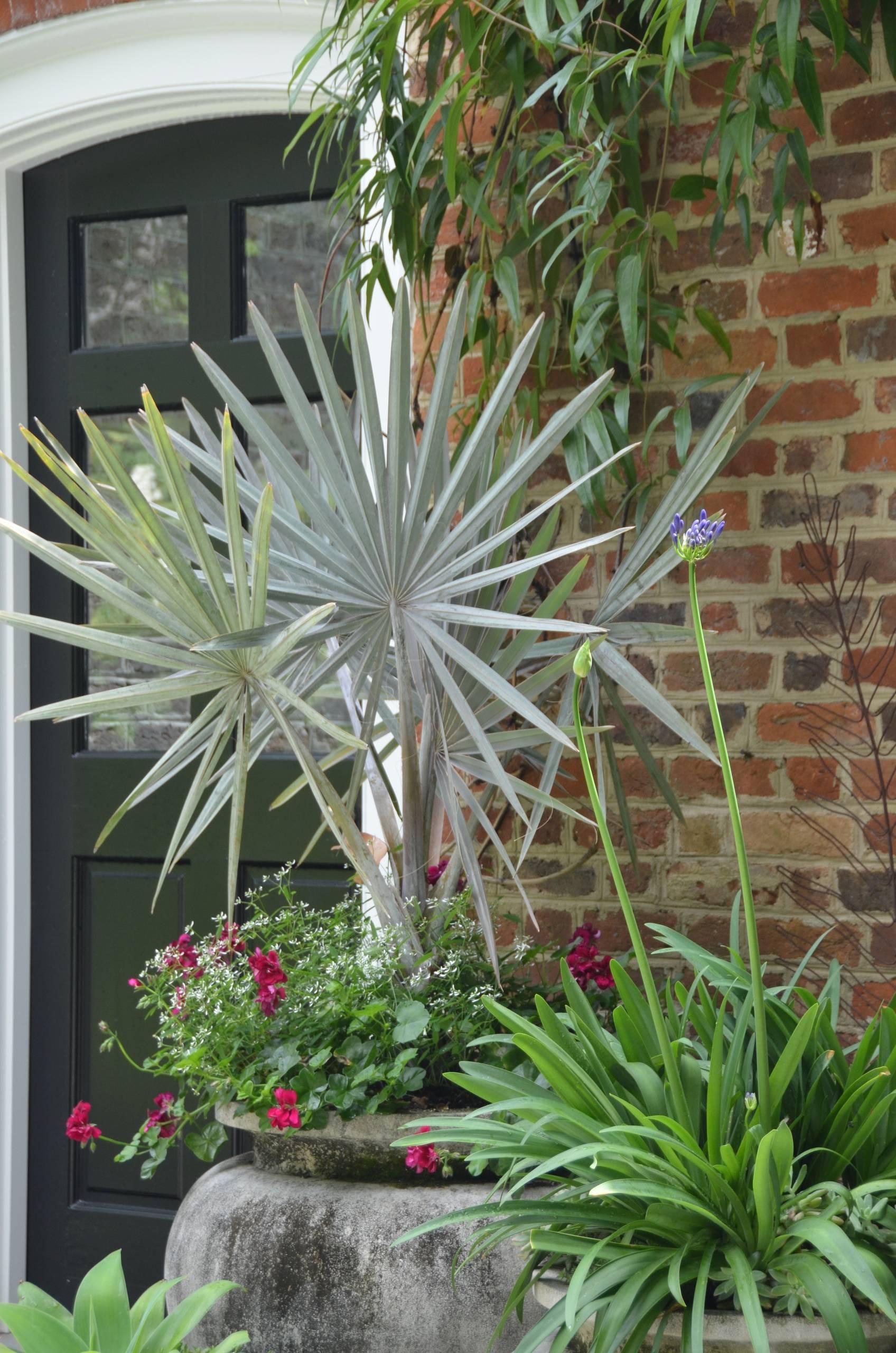 A parede de tijolinhos ganhou um destaque a mais com a presença do vaso de palmeira azul