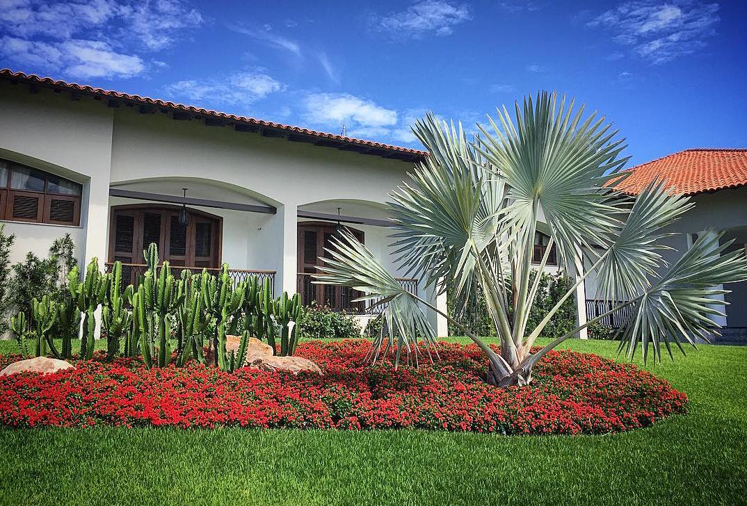 De um lado, o maciço de cactos e do outro, a espaçosa palmeira azul