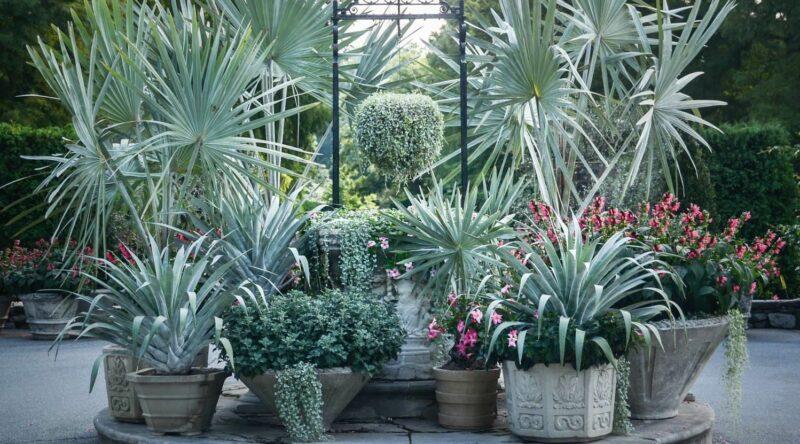 Palmeira azul: saiba como cuidar e veja 60 ideias de paisagismo