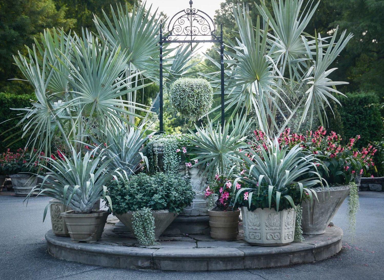 Para se perder em meio a tantas e deslumbrantes palmeiras azuis; todas elas plantadas em vasos