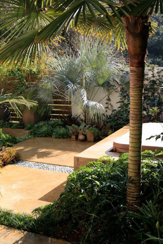Folhas espalmadas da palmeira azul formam a sombra ideal para o desenvolvimento das folhagens plantadas logo abaixo dela