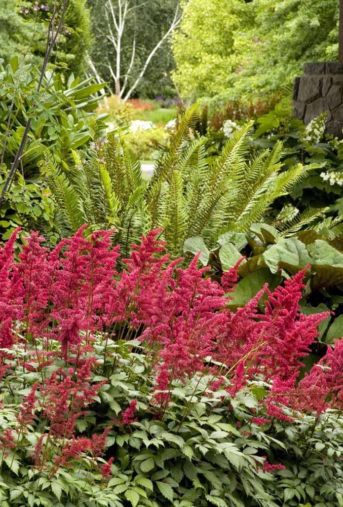Um jardim colorido e iluminado com a Astilbe