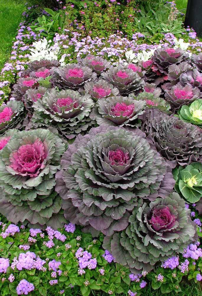 Flores 101 Tipos E Espécies Para Colorir O Seu Jardim