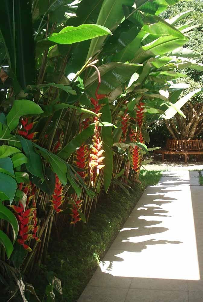Alegre e tropical: a helicônia é sempre um sucesso
