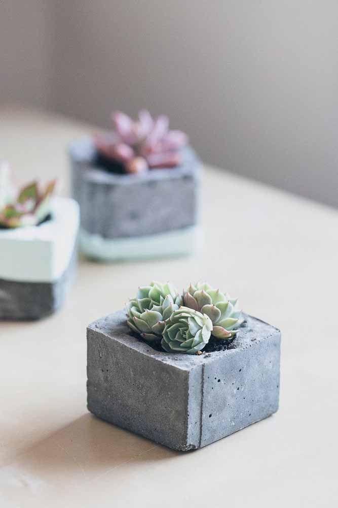 Vasos de cimento com suculentas: faça você mesmo os vasos