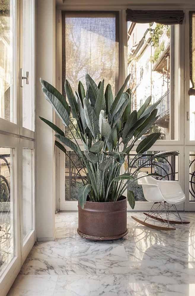 Um modelo mais baixinho de tambor serve como vaso para plantas