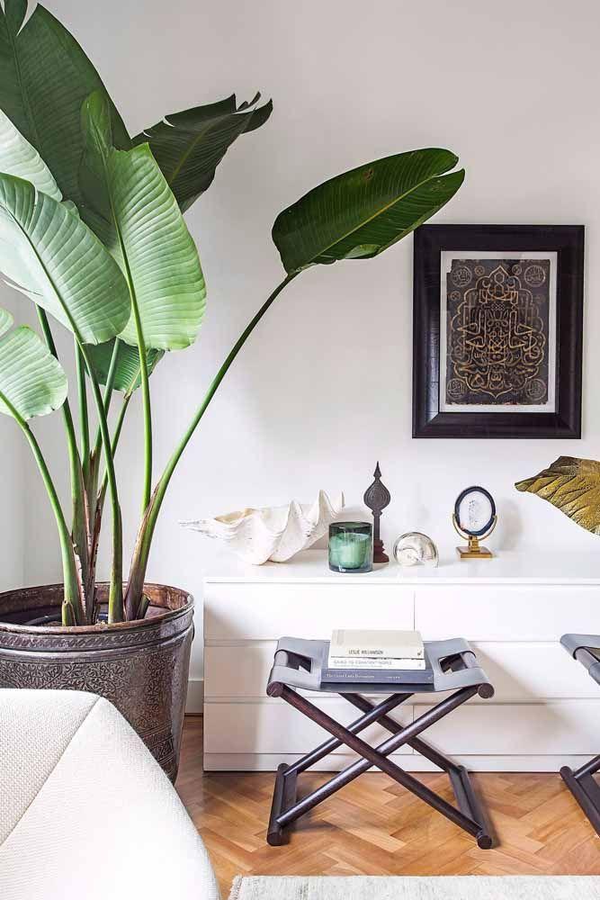 Um vaso marrom e elegante para receber a alegre e tropical bananeira de jardim