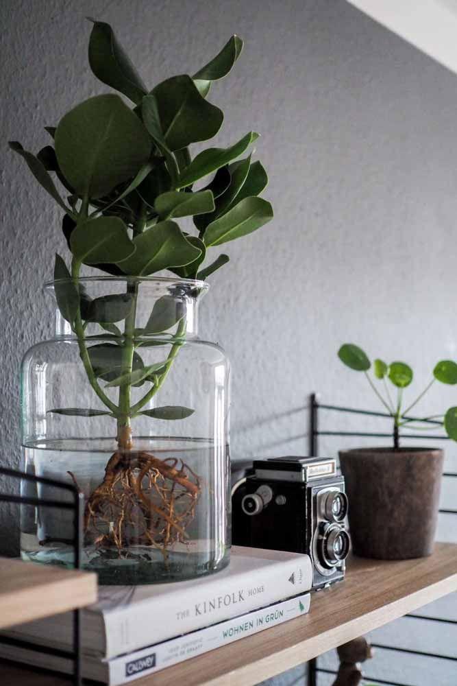 Os vasos de vidro recebem muito bem plantas que se desenvolvem na água, como essa da imagem