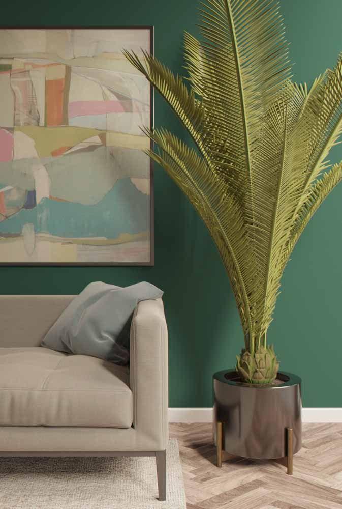 Um vasinho baixinho e miúdo para a palmeira: certas coisas é preciso ver para crer