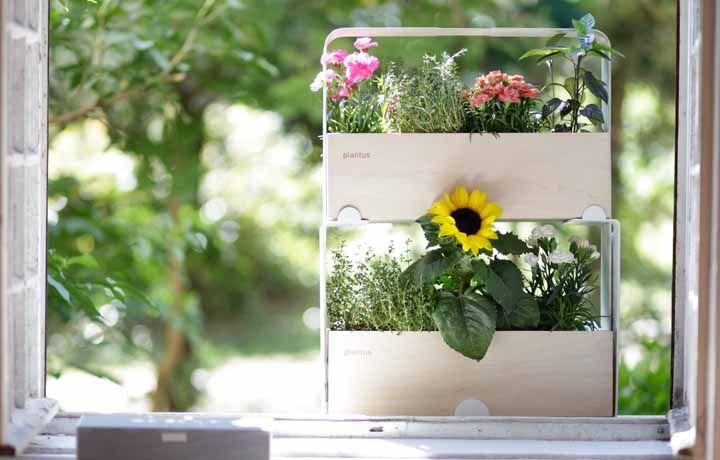 Nessa janela, pequenas espécies de flores transmitem cor, beleza e alegria