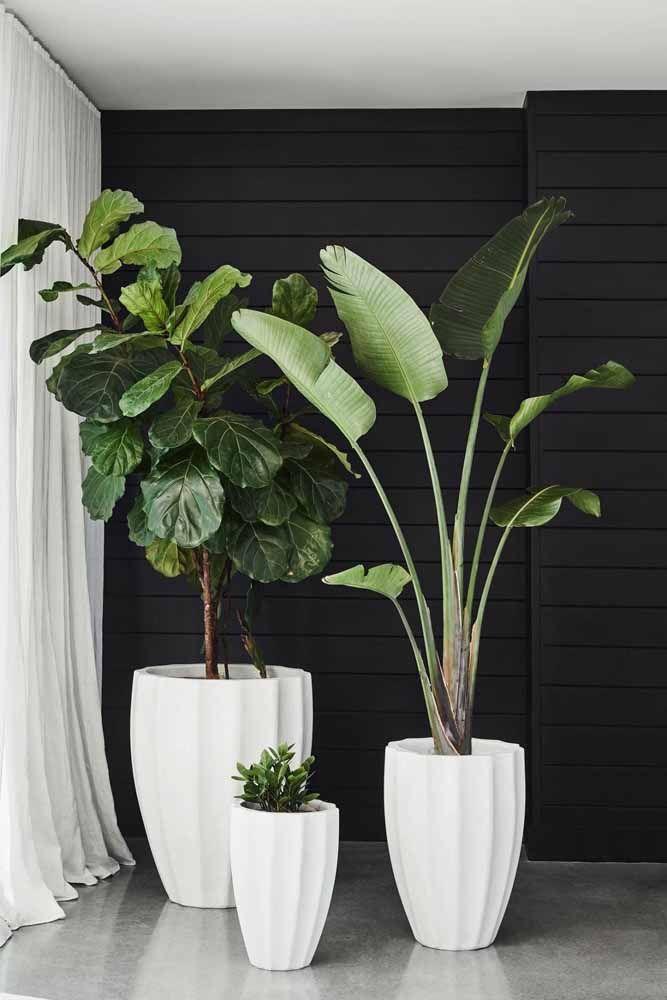 Lindo trio de vasos brancos para três espécies diferentes de plantas