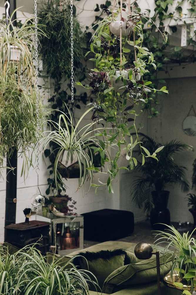 Uma sala em meio à natureza: a altura variada das plantas faz lembrar uma pequena selva