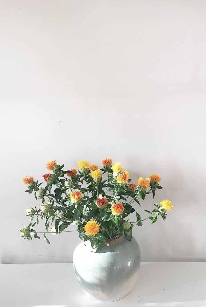 Você também pode criar um arranjo só de Cartunus e explorar a beleza única dessa flor do campo