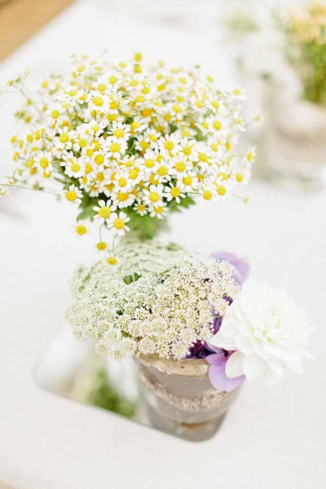 Toda beleza das delicadas flores de Áster