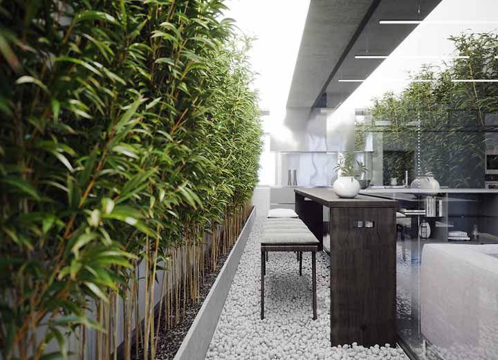 Bambus! Uma das espécies preferidas para o cultivo dentro de casa