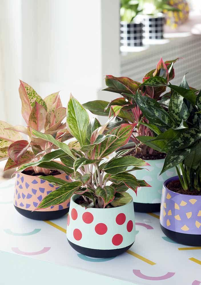 Um conjunto de aglaonemas em vasos coloridos para alegrar o banheiro iluminado
