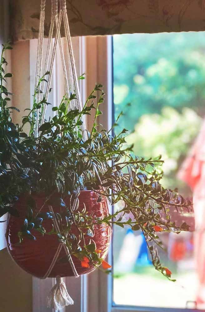 No suporte de macramê, essa columéia aprecia a vista da janela
