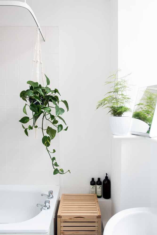O suporte da cortina também funcionou para dar sustentação ao vaso de filodendro