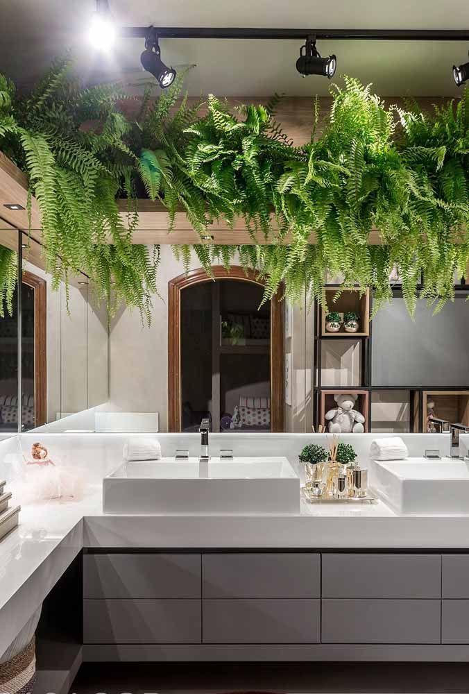 Volumosas e viçosas, esse jardim suspenso no banheiro foi criado apenas com samambaias