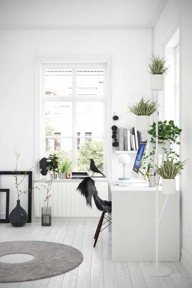 Plantas, muitas plantas!