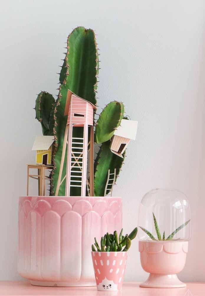 Para o conjunto de cactos e suculentas, cachepots cor de rosa