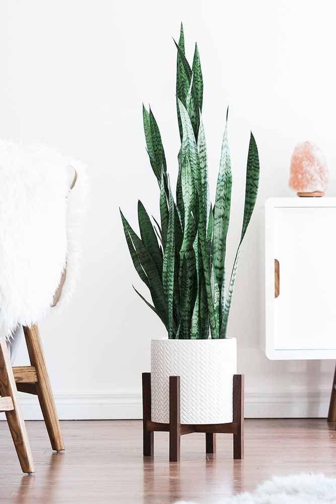 O clean, neutro e sempre charmoso cachepot branco