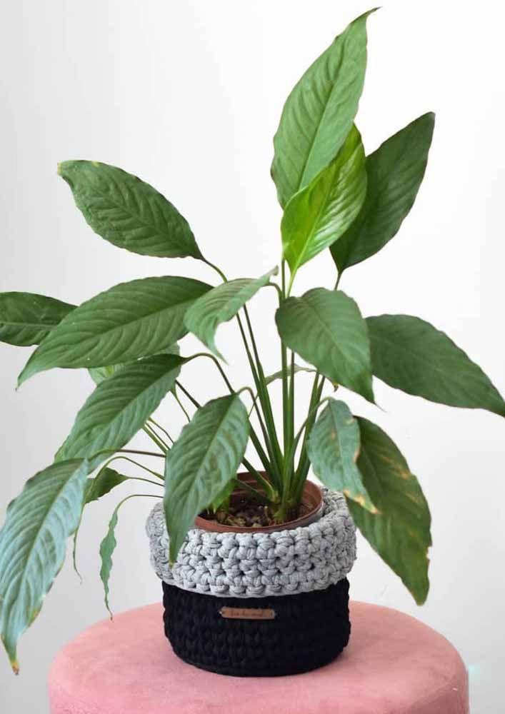 Os cachepots de crochê também estão em alta; lembre-se de tirar a plantinha de dentro dele na hora de regar