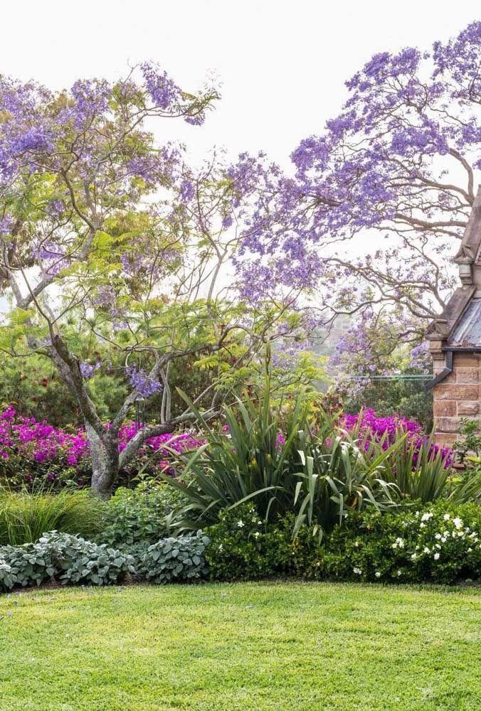 Meu pé de jacarandá...De porte médio a grande a Jacarandá impressiona pelo tom lilás delicado de suas flores