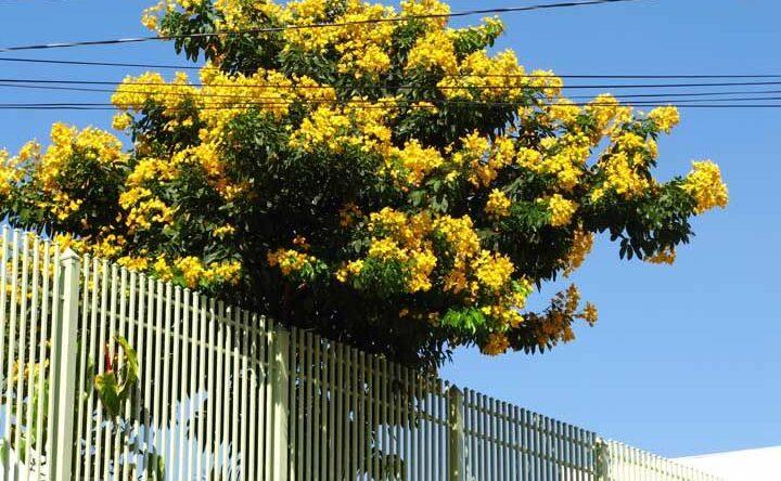 Árvore para jardim: dicas para escolher, espécies e fotos