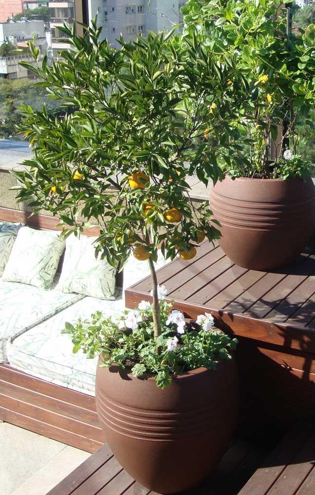 E que tal plantar em sua calçada uma árvore frutífera? Pode ser um pé de laranja