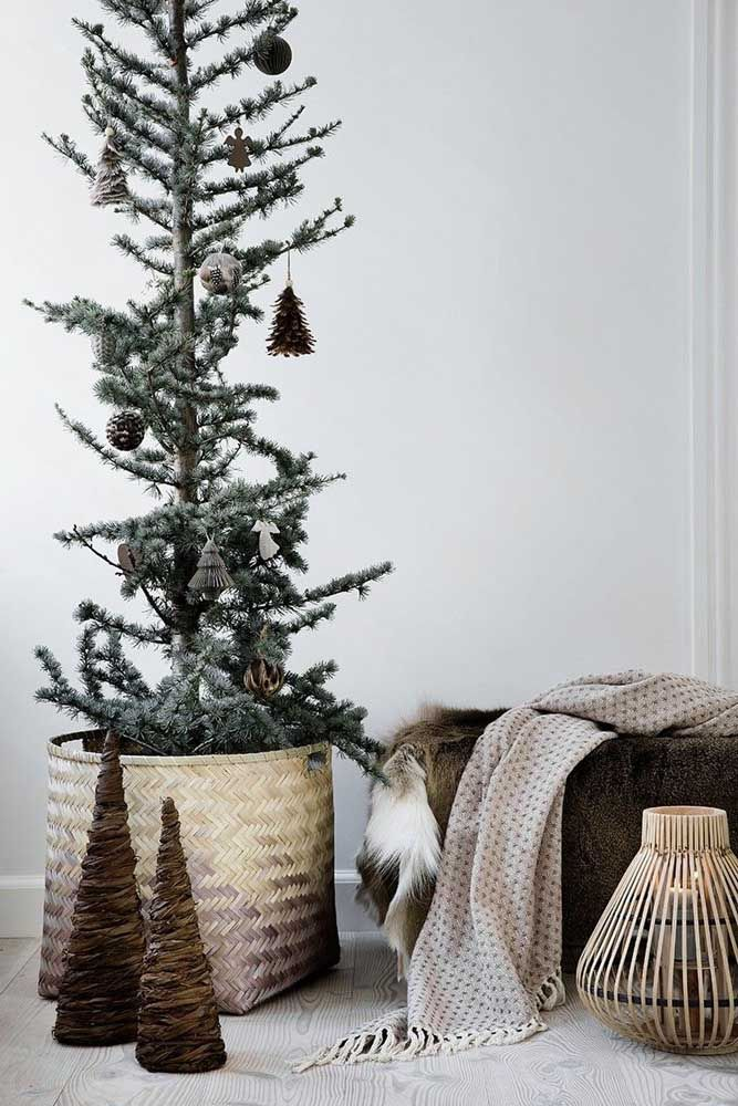 Toda simplicidade e delicadeza de um pinheiro natural
