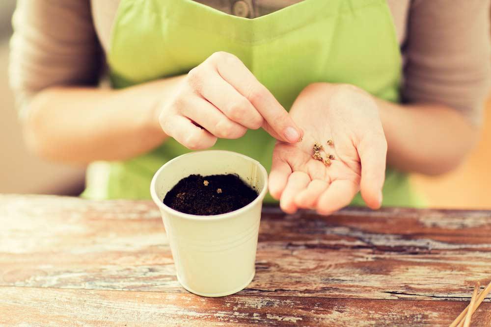 Conceito de semente e vaso