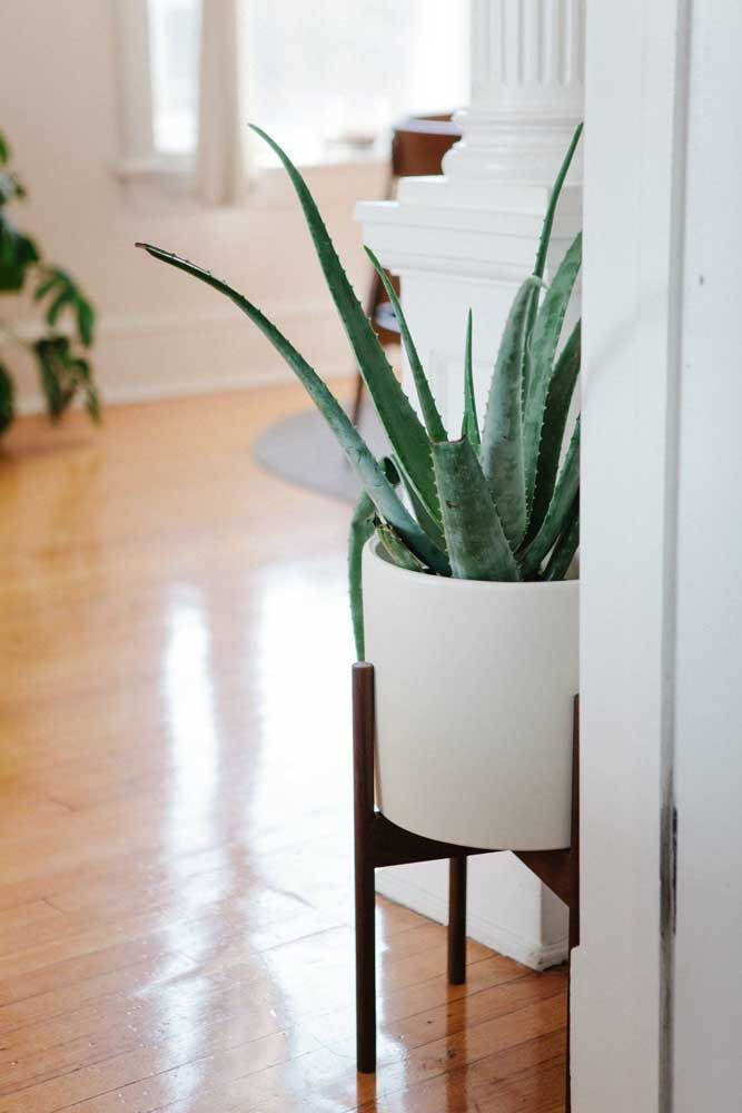 No cantinho do corredor, o vaso alto de babosa revela toda sua beleza decorativa