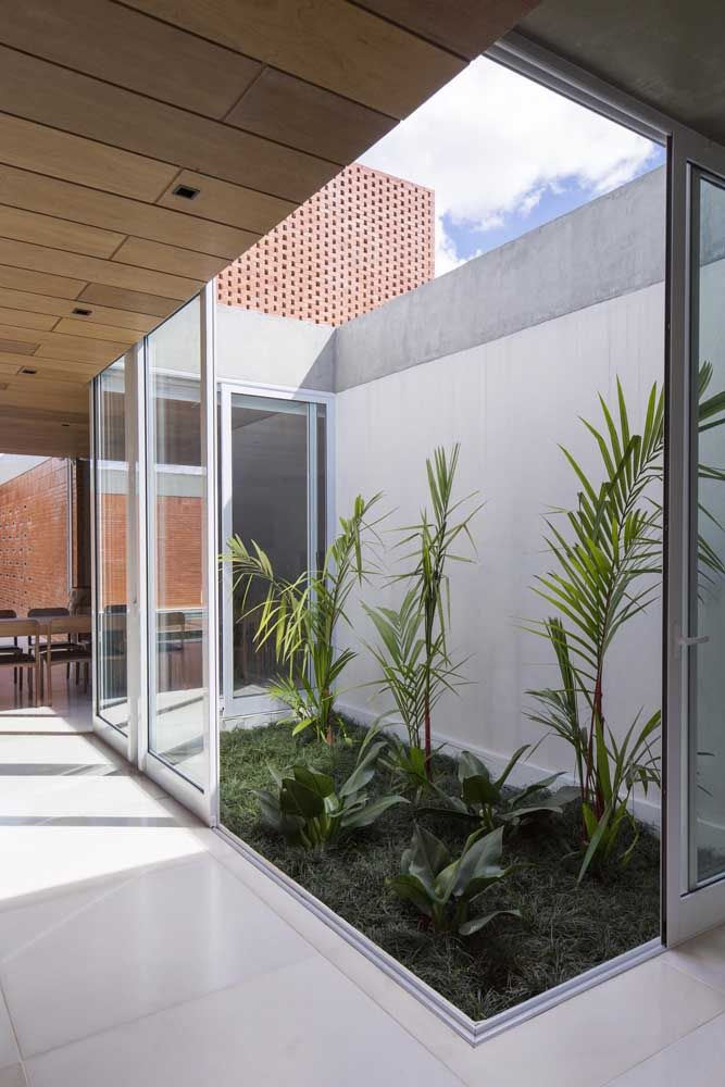 Escolha as plantas do jardim de inverno de acordo com o grau de luminosidade e ventilação que o local recebe