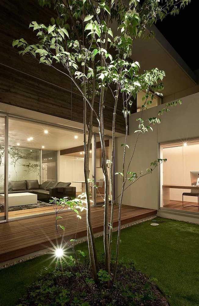 Mantenha sempre seu jardim de inverno podado, regado e bem iluminado