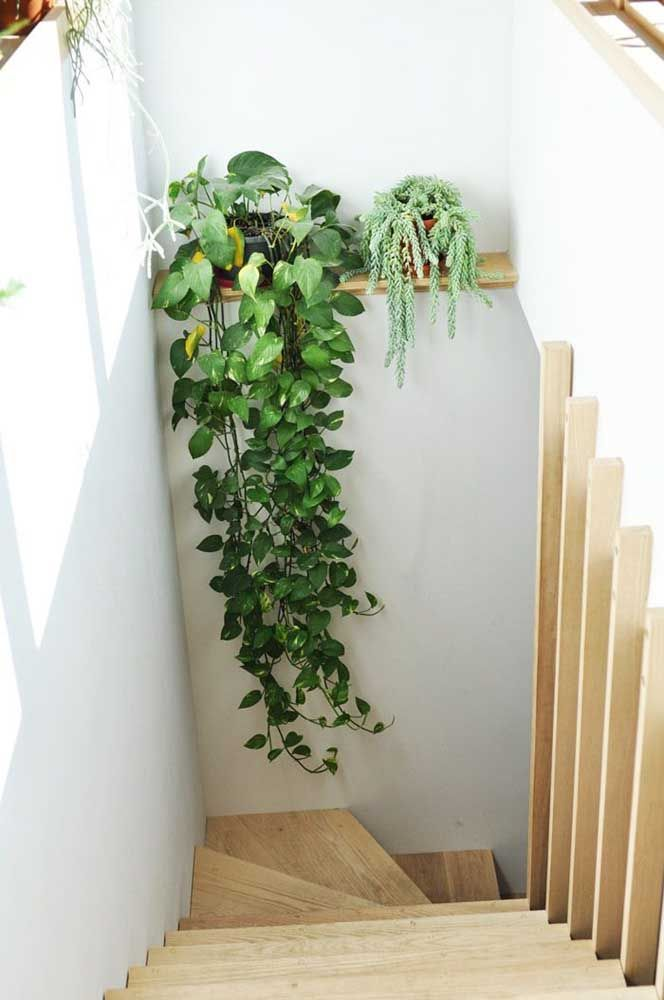 A escada iluminada é o refúgio perfeito para essa jiboia pendente
