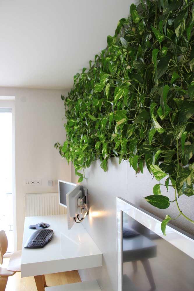 Faixa verde de jiboias; sem um espacinho sequer para ver a parede ao fundo