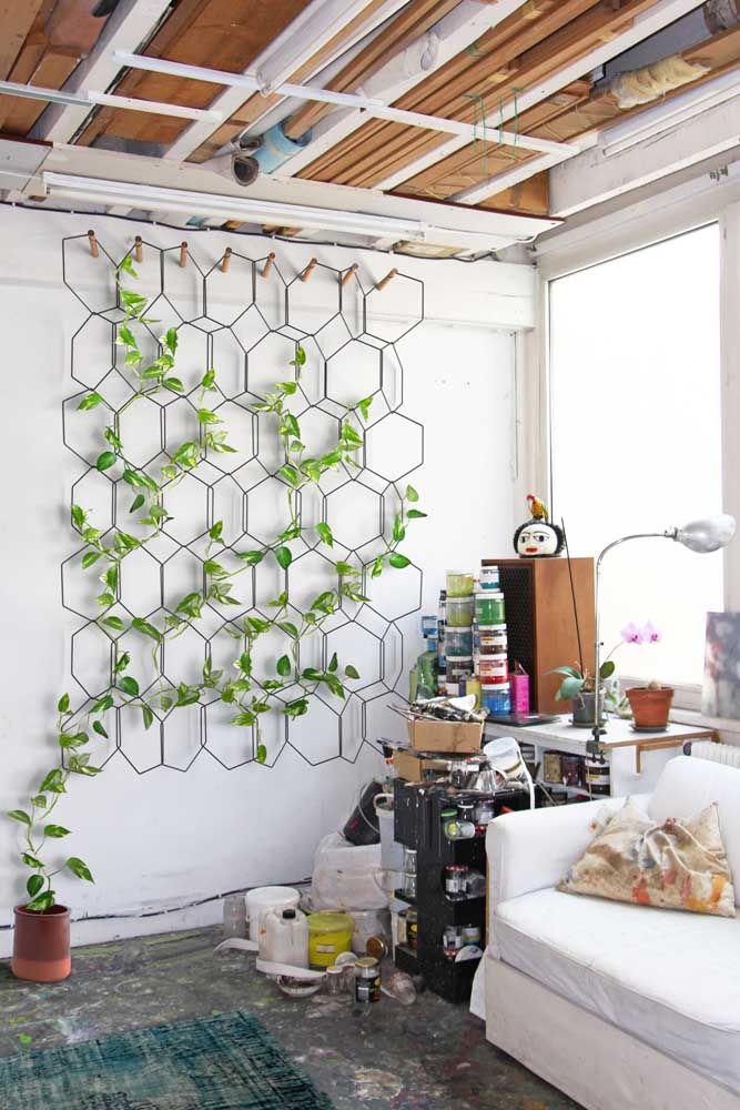 Coloque a jiboia no chão e direcione o crescimento dos ramos com um suporte de parede
