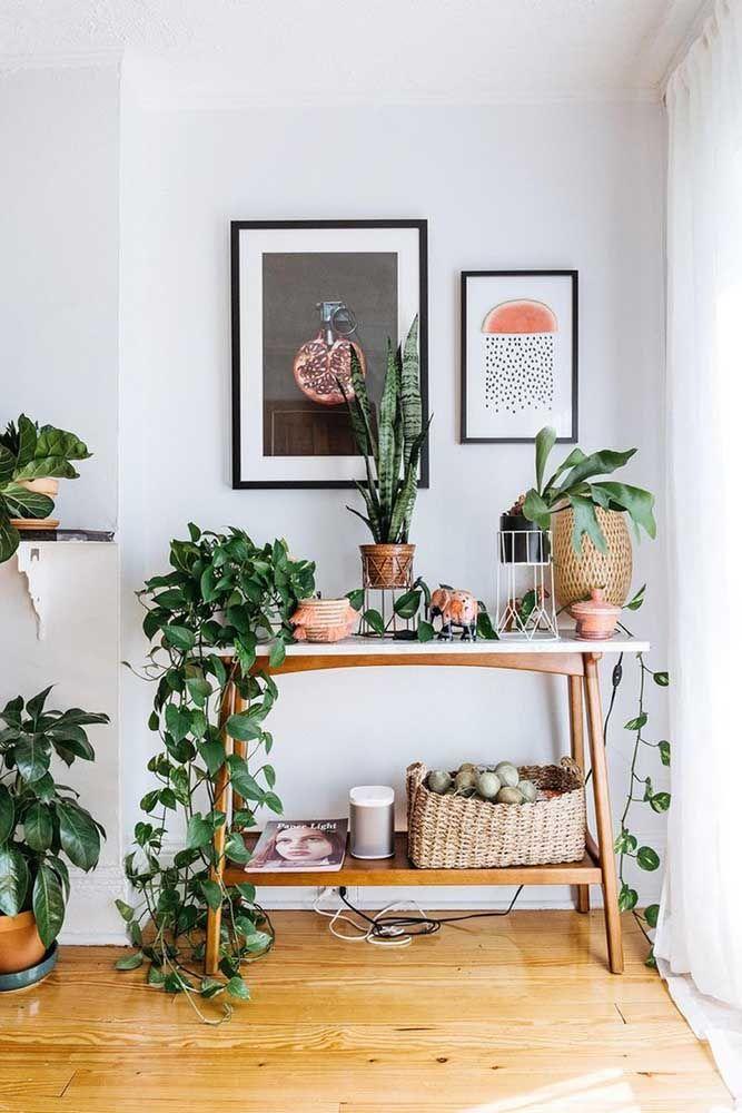 Cantinho verde da casa conta com mix de plantas, entre elas a jiboia que cresce de modo pendente, as espadas de são Jorge e os chifres de veado