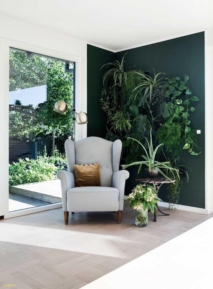 Jardim vertical de plantas tropicais e é claro que a jiboia não iria ficar de fora