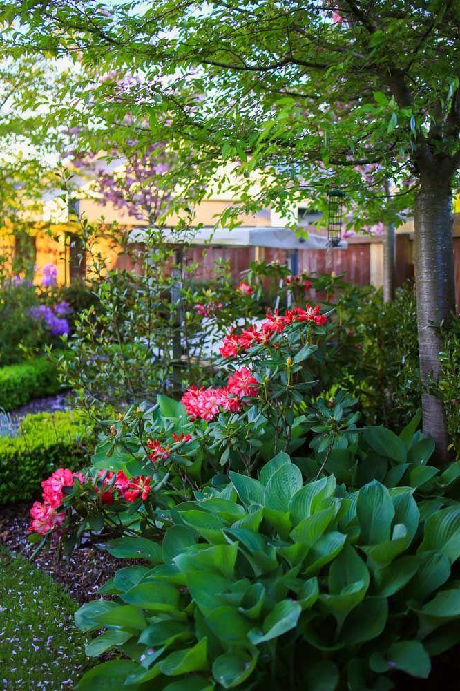 As azaleias trazem cor para esse jardim tropical