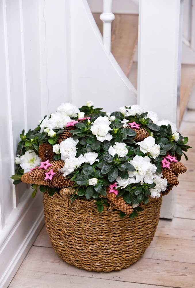 Contraste entre o cachepo rustico e as flores brancas delicadas da azaleia