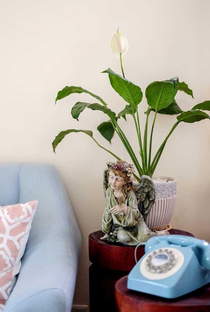 E se a planta é da paz, nada melhor do que um vaso adornado com anjo para fortalecer essa característica