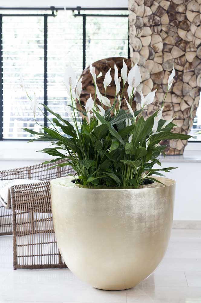 O vaso gigante de lirios da paz rouba toda a atenção dessa decor