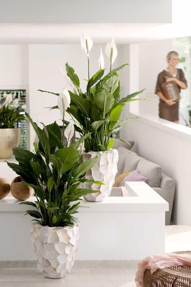 Mas quem deseja imprimir um visual mais elegante e sofisticado aos lírios da paz pode optar por vasos em cerâmica, como esse da imagem
