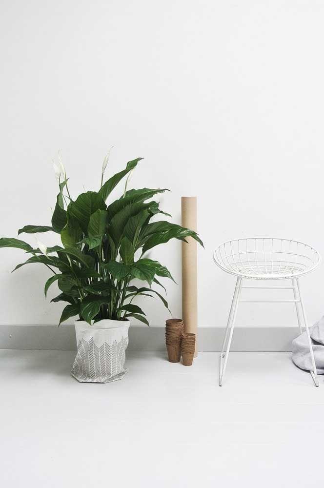 Acrescente vida e cor a decoração branca usando lirios da paz