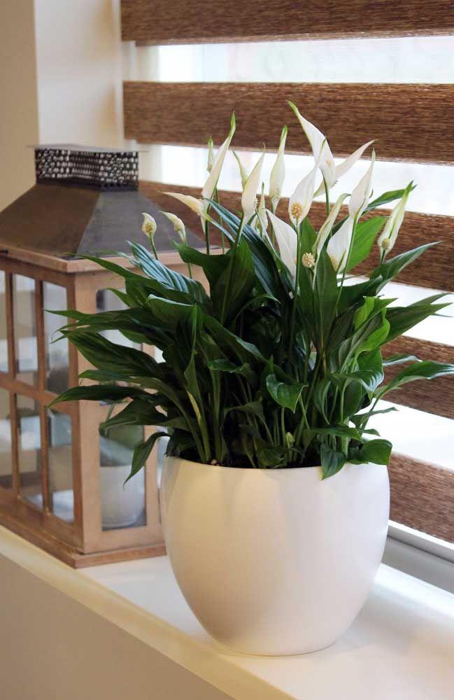 Quanto maior o vaso, mais lírios irão desabrochar na sua casa