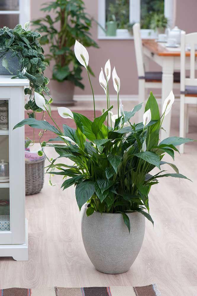 Complete a decoração da área externa com um vaso de lírios da paz