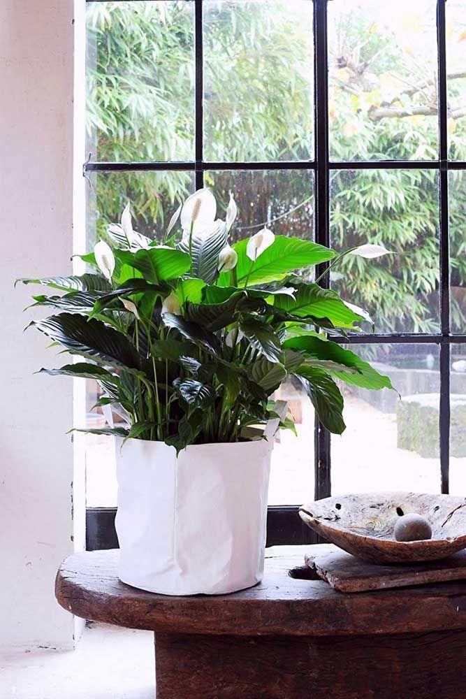 Uma enorme janela para banhar o vaso de lírio da paz com muita luz natural
