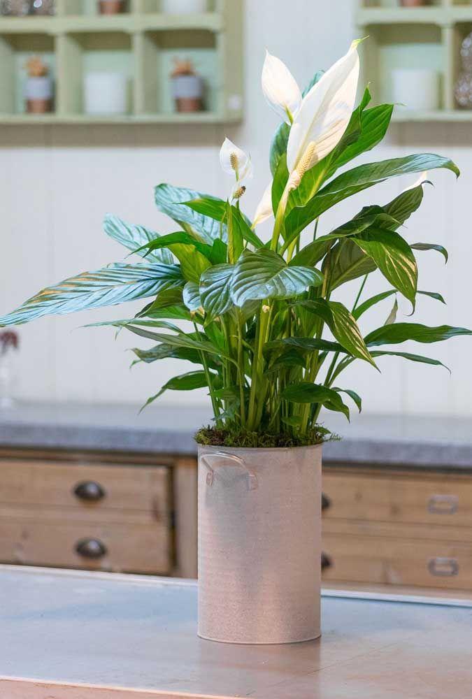 A latinha que virou vaso dá um charme todo especial para os lírios da paz